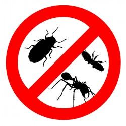 蟑螂/螞蟻/跳蚤防控